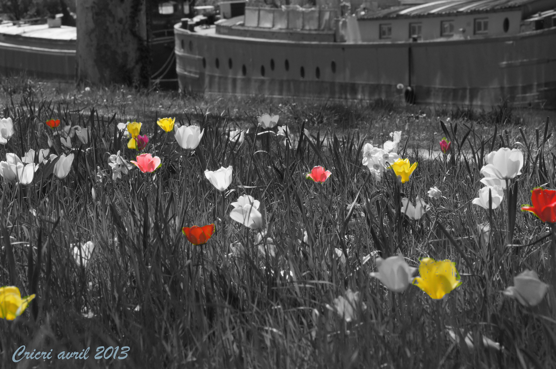Defi photos 2013 avril fleur des champs ou champ de fleurs myopecommeunetaupe - Fleurs des champs blanches ...